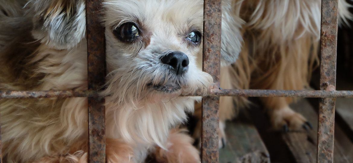old dog in cage