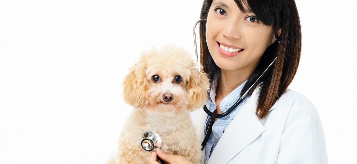 Asian female veterinarian
